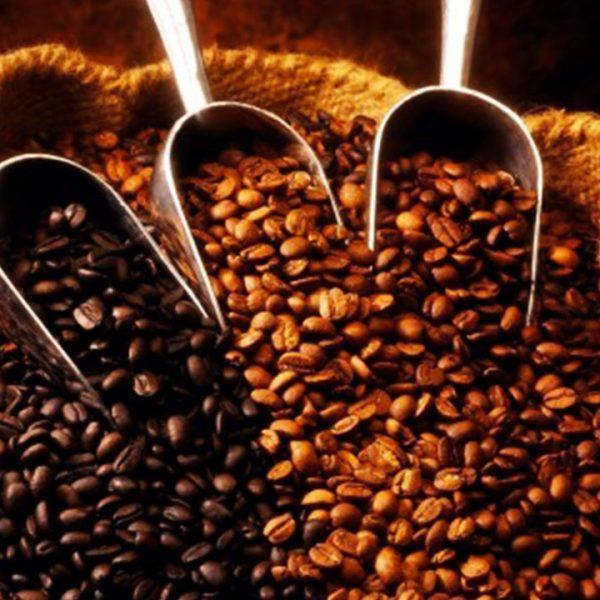 Importador de Café
