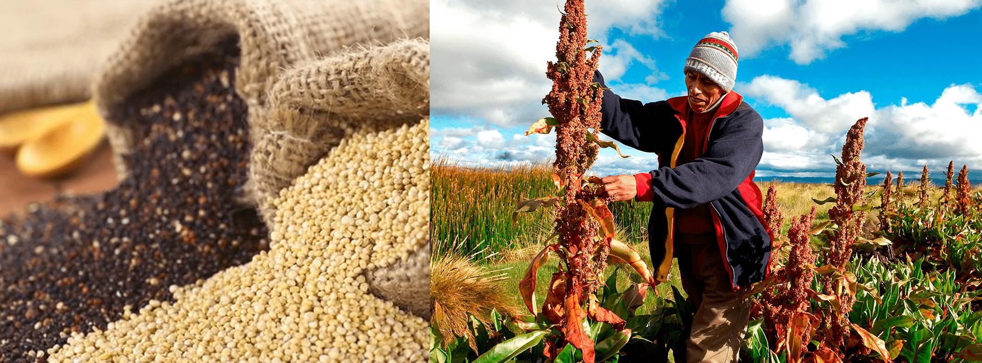 quinoa-min-1-1 Inicio